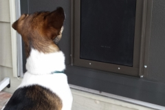 mobile-screens-cat-dog-screens-doors-05